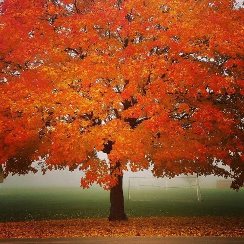 fall-tree-by-old-ms-elm-st